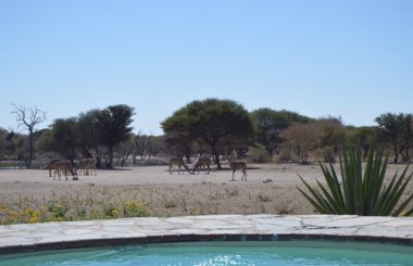 BOKAMOSO SAFARI LODGE